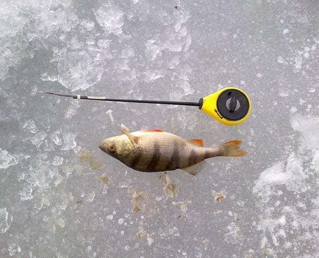 №986. Мой отчет о рыбалке .Освоение нового для меня вида рыбалки зимой.