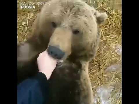 Российские летчики играют с подопечным медведем