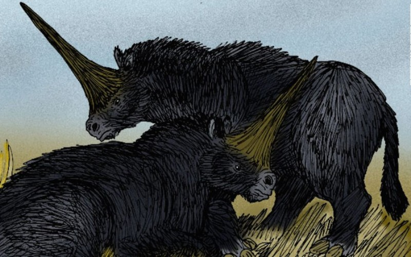 Последний сибирский единорог