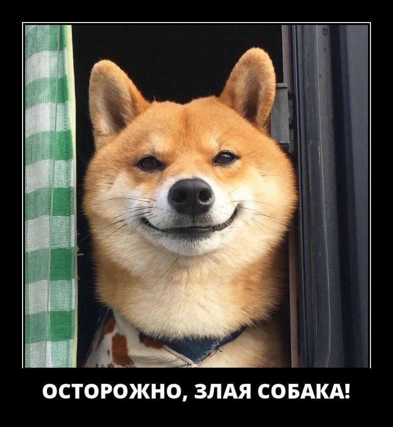 Осторожно, злая собака! демотиватор, демотиваторы, жизненно, картинки, подборка, прикол, смех, юмор