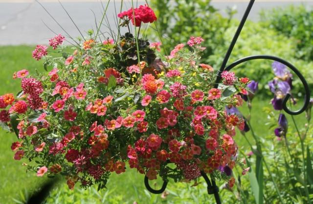 Висячие сады из летников