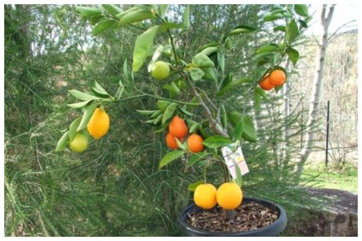 Дерево фруктовый салат фото