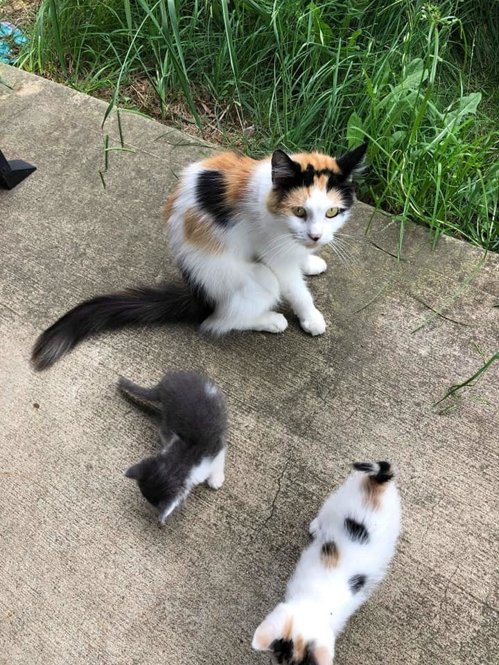 кошка и котята на улице