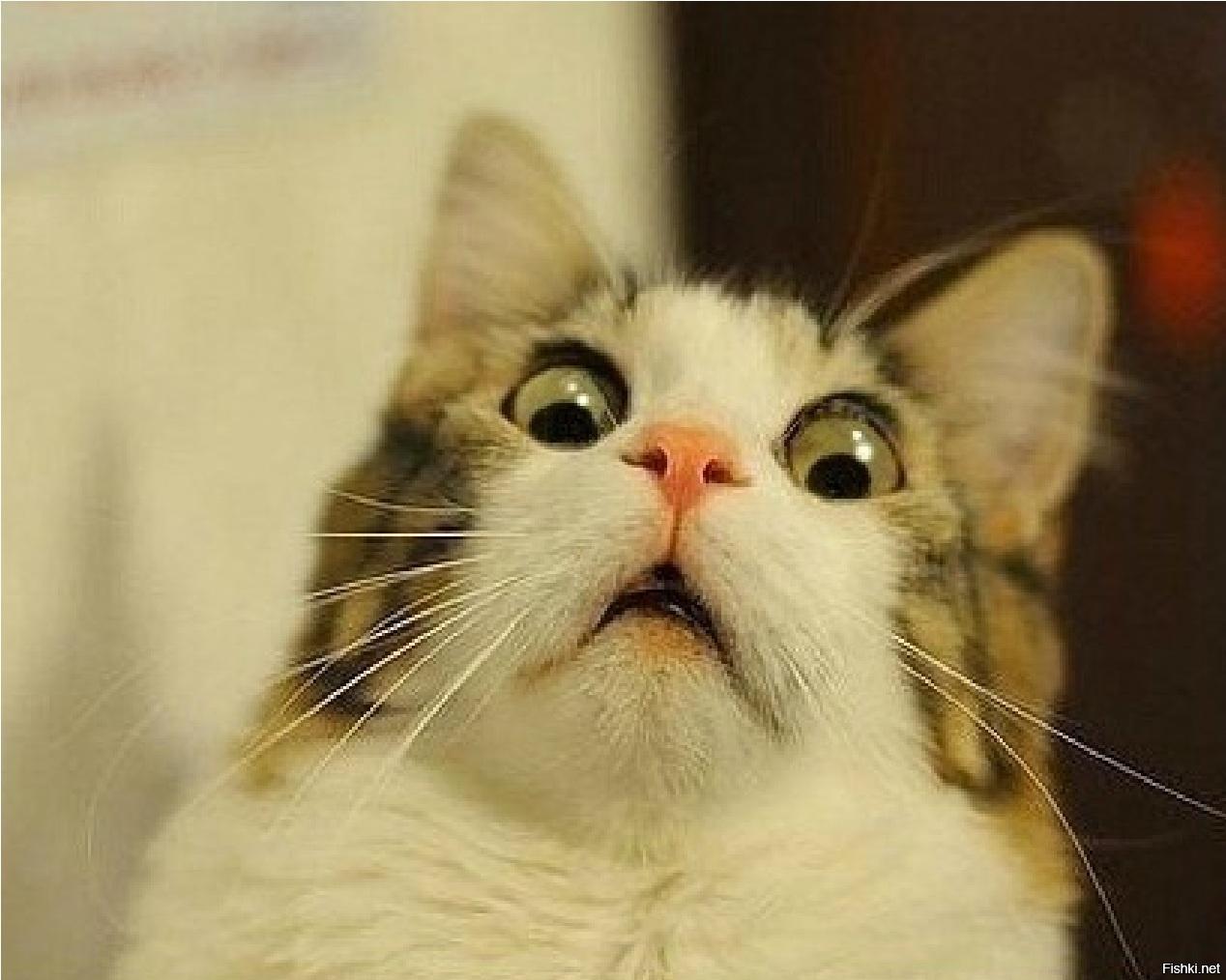Японцы растягивают котов. Зачем?!