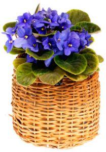Комнатные растения зимой уход