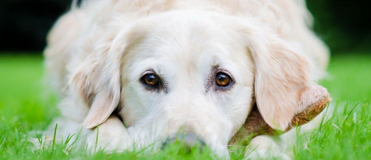 Мой пес Мерфи