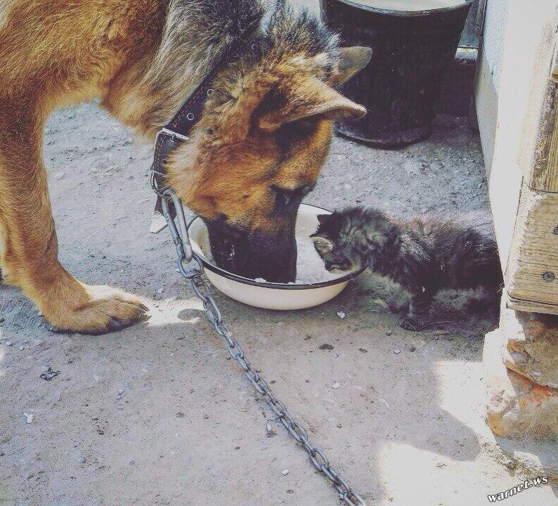 Собаки + кошки = дружба навек!