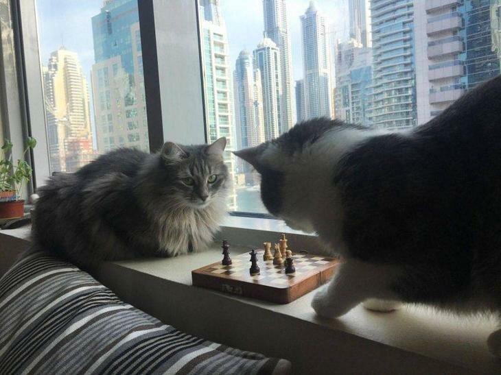 Чем коты занимаются в отсутствии хозяев? настроение, позитив, юмор