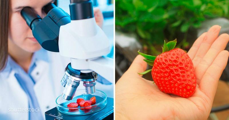 Употреблять побольше или ограничить: что происходит с телом, когда вы едите клубнику?
