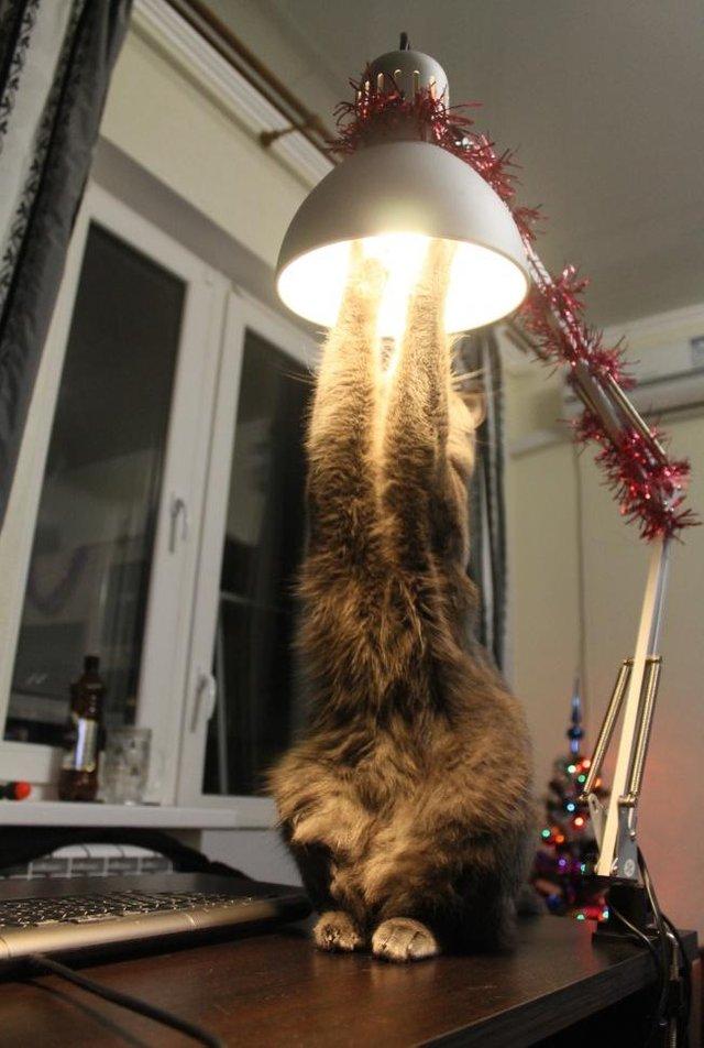 Смешные открытки кошки на люстре