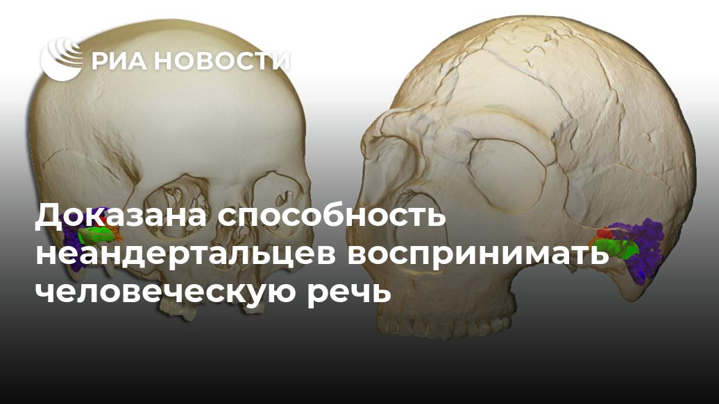 Доказана способность неандертальцев воспринимать человеческую речь