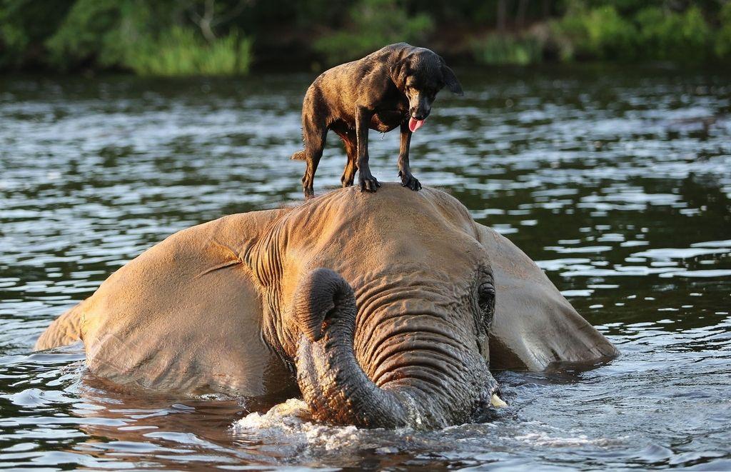 вас картинка как животные помогают друг другу стали, даже