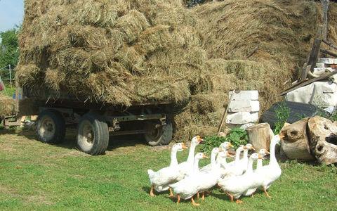 Противостояние: дачники избили фермера из-за звука работающего трактора