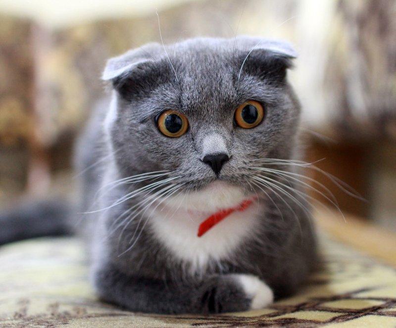 6. Кошки не всегда имели такие большие глаза: они развились из-за необходимости постоянной охоты в условиях низкой освещенности. кот, кошка, факты