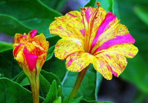 Ароматные цветы вечернего сада
