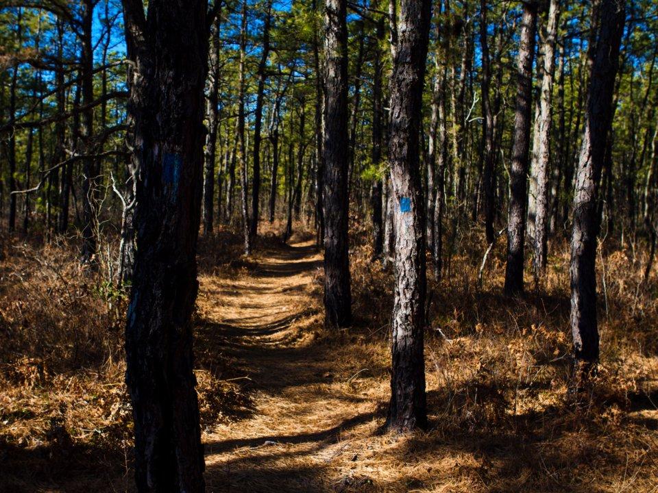 Самые жуткие леса планеты