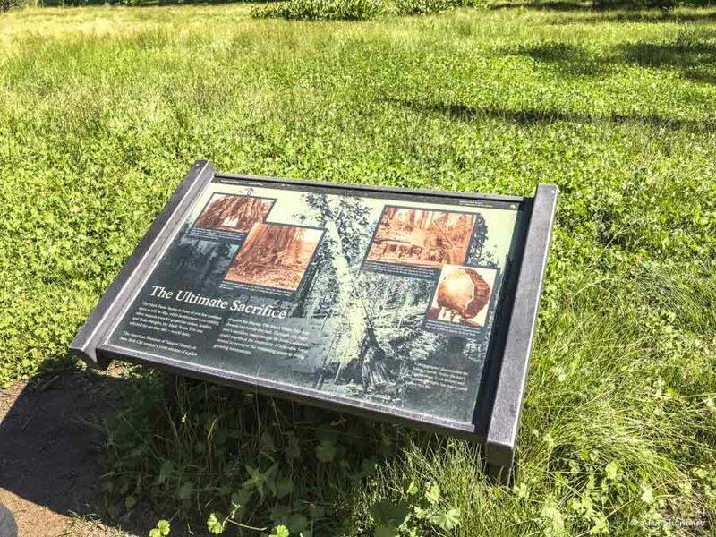 Тропа Большого пня - памятник человеческому вандализму и жестокости к природе видео, путешествия, секвойя, сша