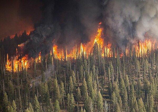 Кто, зачем и в чьих интересах поджигает леса России?