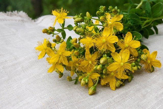 Растения-антидепрессанты, которые стоит посадить на даче