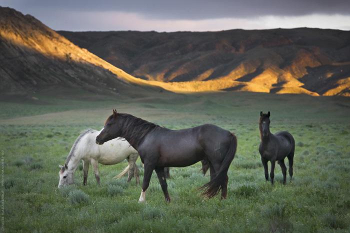 Полудикие лошади в Долине Замков. / Фото: Юля Назаренко.