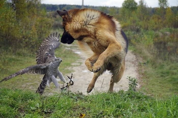 Друзья и напарники по охоте
