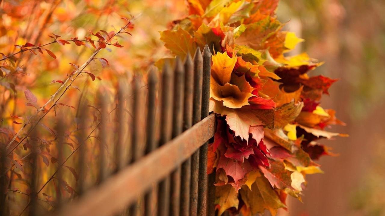 Кто сказал , что осень - это грусть? Осень - это новые надежды...