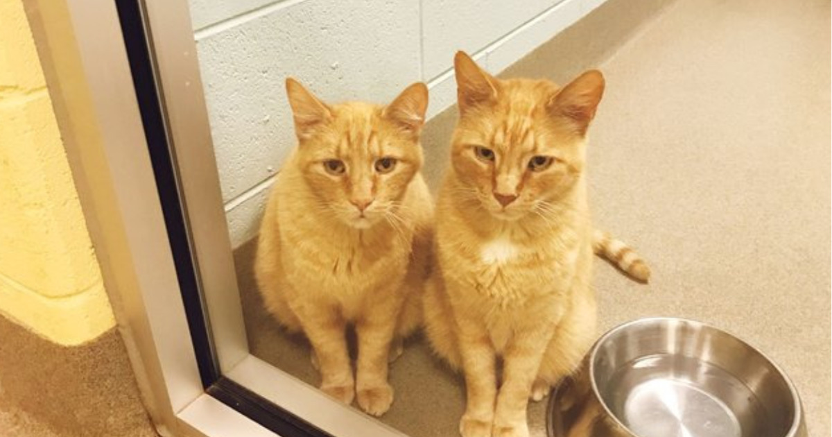 Они не разлучались 12 лет, а потом потеряли хозяев… Но кто же приютит сразу двух котов?!