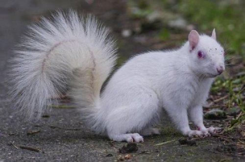 Редкая белка-альбинос попала в кадр в английском парке