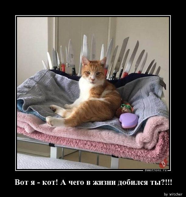 Вот я - кот. А чего в жизни добился ты? демотиватор, демотиваторы, жизненно, картинки, подборка, прикол, смех, юмор
