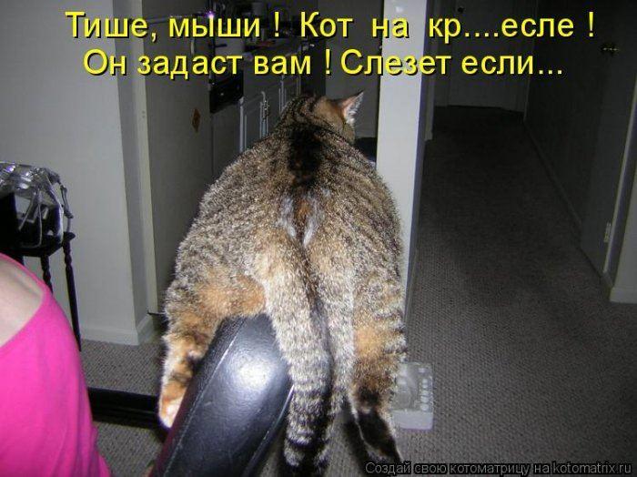 Смешные фото с котами и кошками до слез