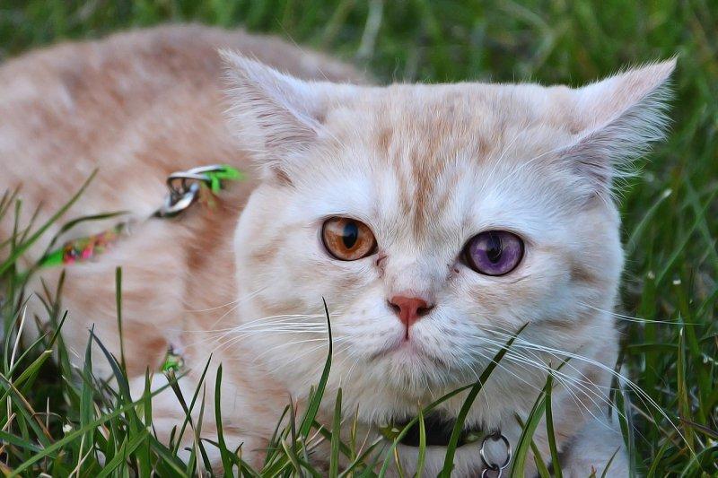 15. Пульс у кошки в 2 раза быстрее человеческого: от 110 до 150 ударов в минуту. кот, кошка, факты