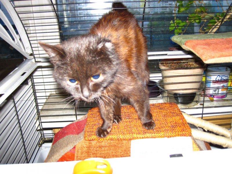 Котенок без ушка не мог даже опереться на лапку кот, котенок, черный кот