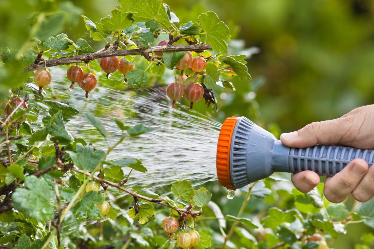 Срочные майские работы в саду и огороде