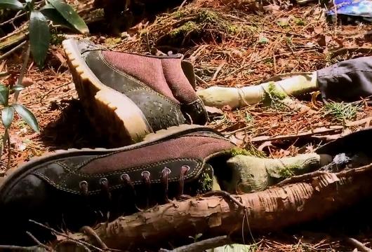Аокигахара — лес самоубийц в Японии.