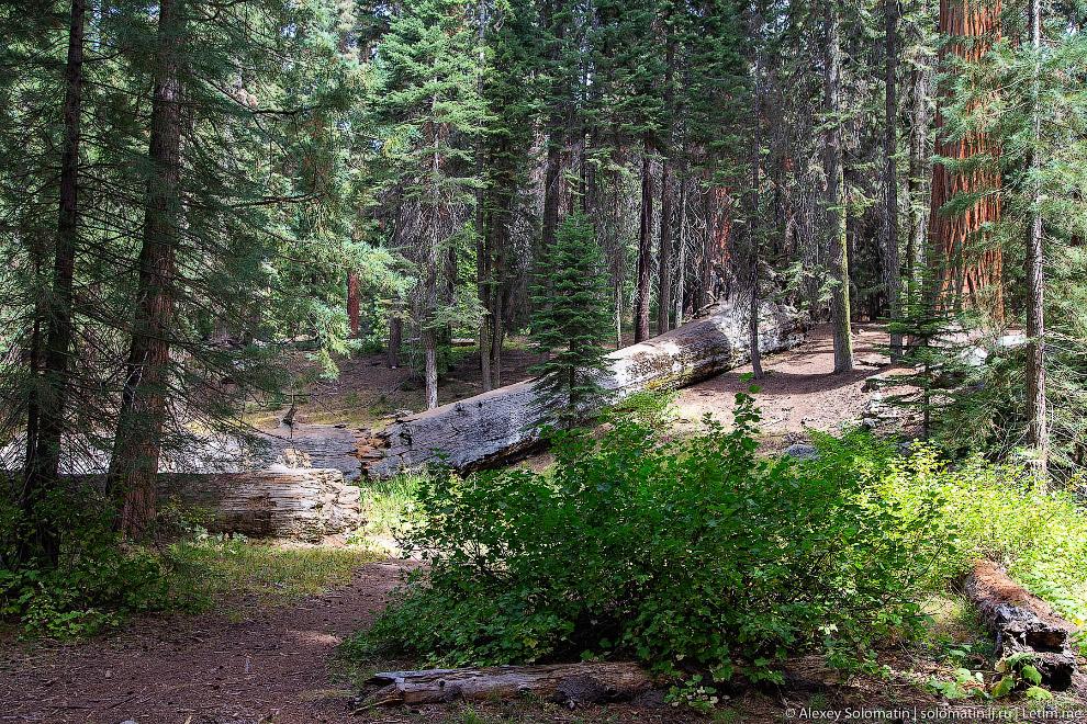 Национальный парк Секвойя в Калифорнии путешествия