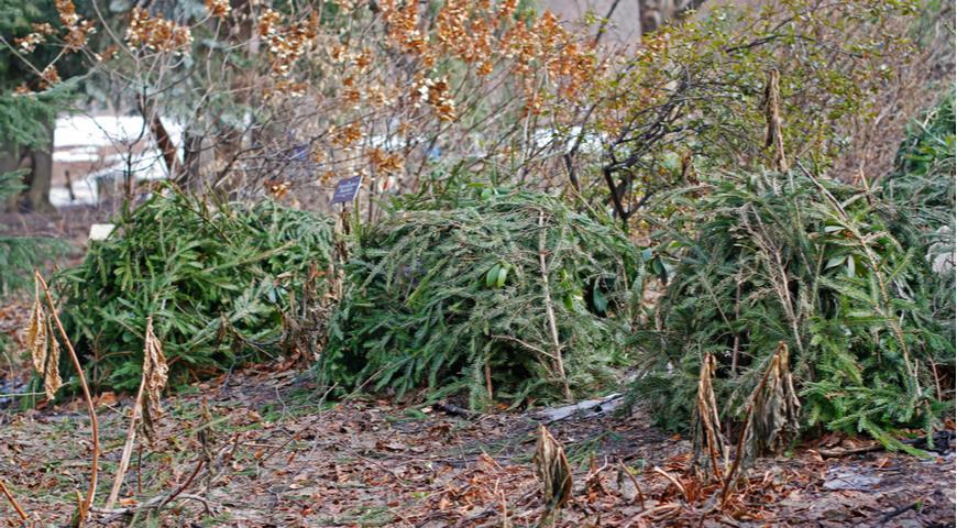 Первые ночные заморозки: что нужно срочно успеть в саду