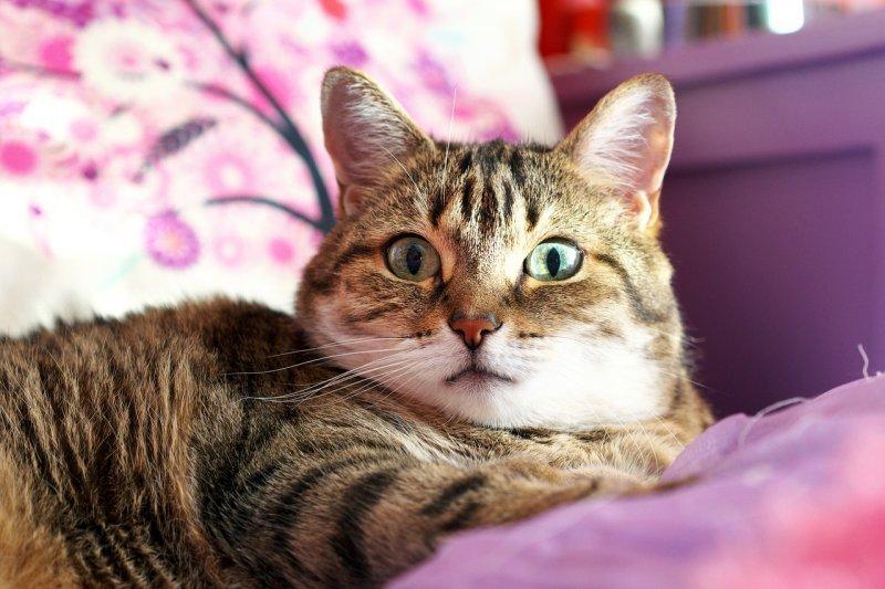 12. Если ученый заводит себе питомца, это чаще бывает кошка, чем собака. кот, кошка, факты
