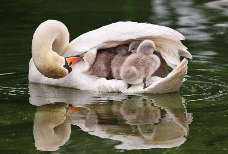 Дикие животные и птицы с детками, на которых не налюбоваться картинки