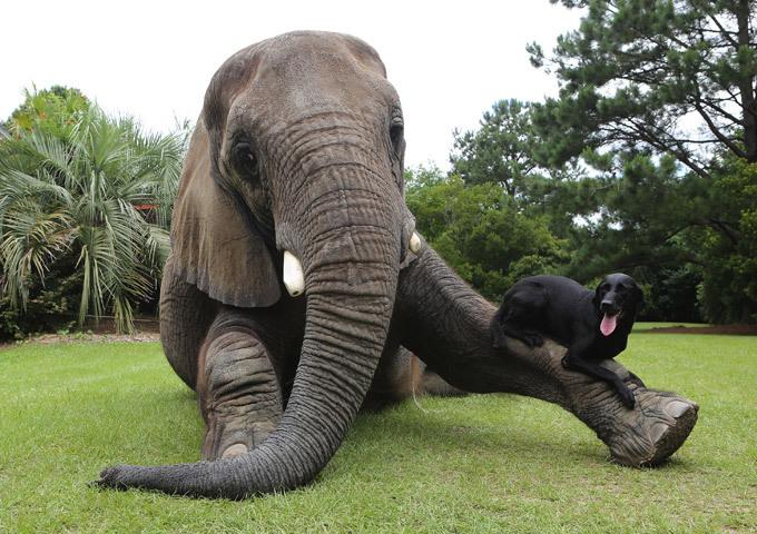 Веселая история о слоне Смешное