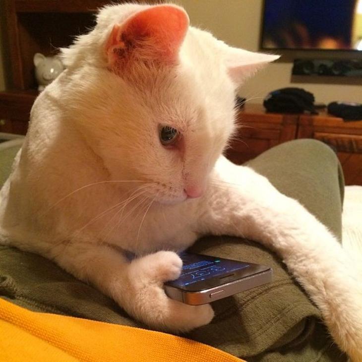 Фото котов, которые с трудом…