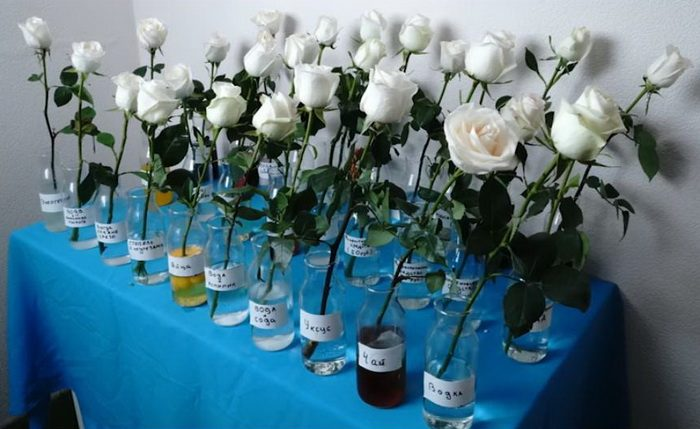 Необычный эксперимент: в каком напитке розы простоят дольше?