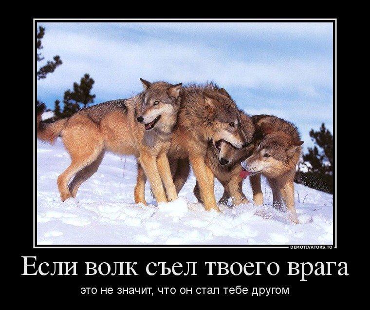 демотиваторы не будь овцой так и волк не съест отряд