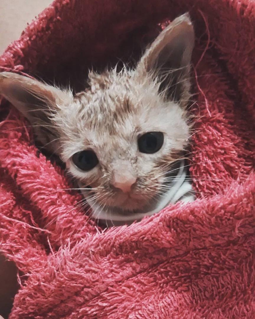 В подъезде в коробке целые сутки сидел маленький котёнок...