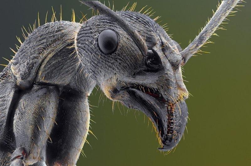 13. Этому муравью плевать, что мода на готов прошла в мире, животные, красота, природа, удивительно, фото