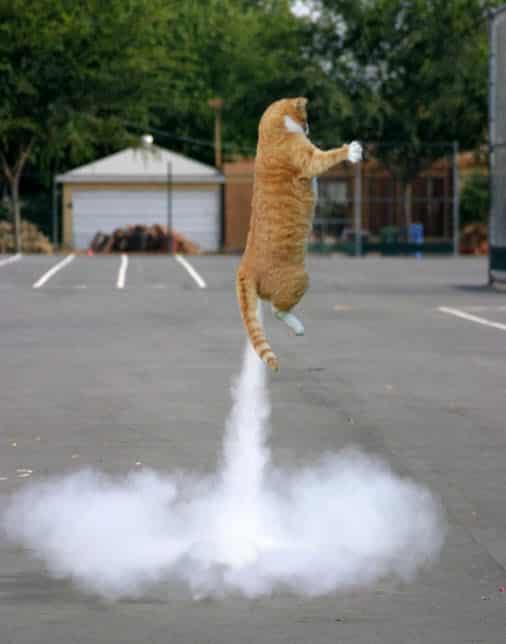 19 особенно удачных фотографий котиков