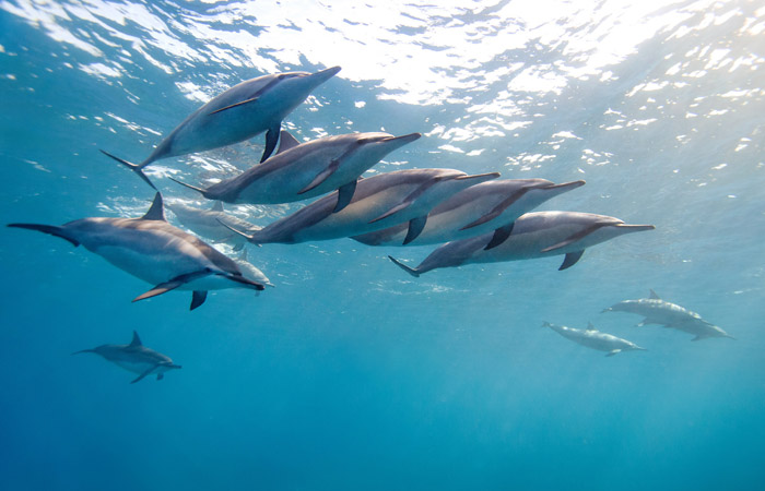 Дельфины – уникальные жители нашей планеты