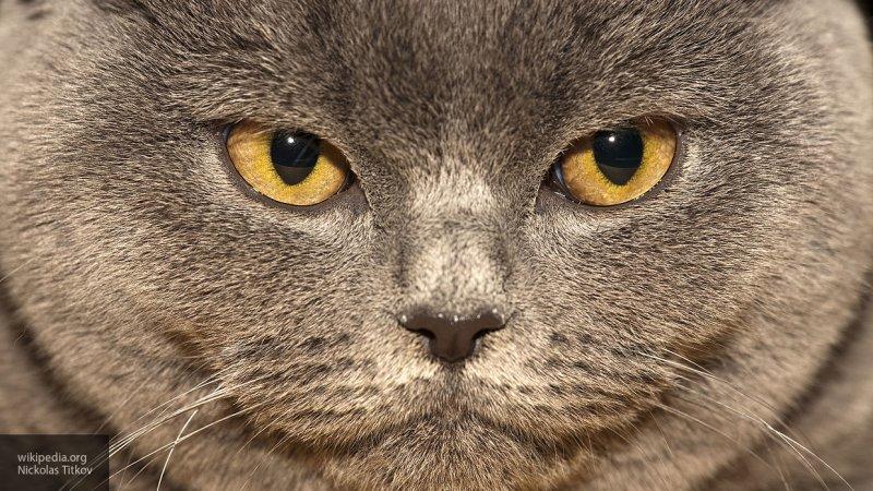Появилось видео кота, очарованного полетом таинственных светящихся шаров