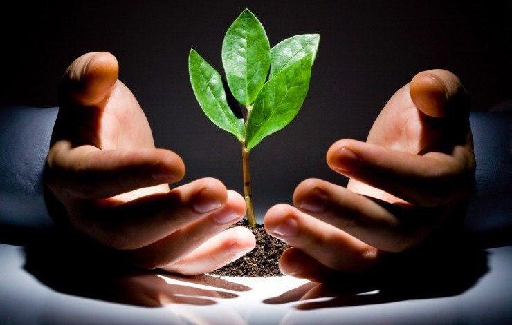 Биопрепараты для защиты растений от болезней и вредителей