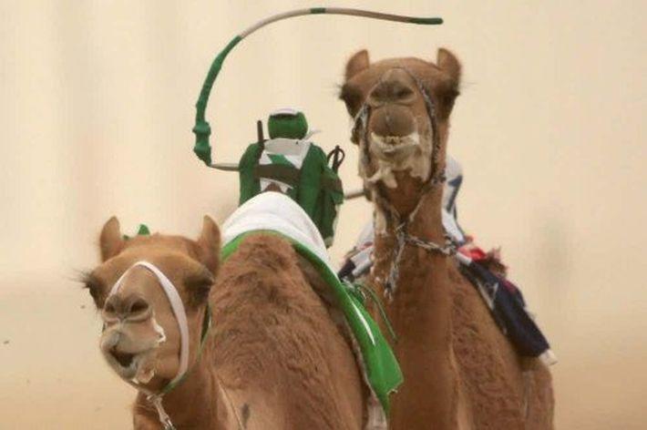 15 невероятных фактов про Дубай