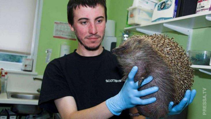 Необычные медицинские проблемы животных